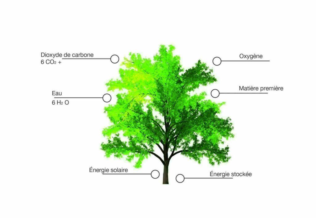 Bild Baum FR Webseite