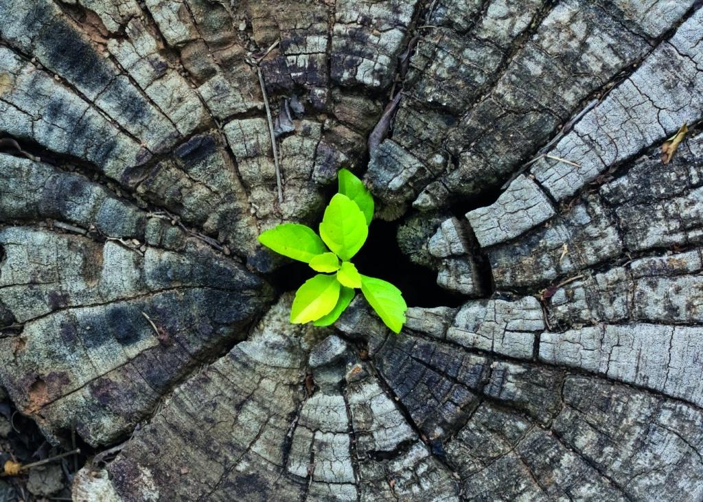 Ecologia e sostenibilità sono precondizioni per la scelta delle risorse Admonter